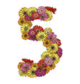 five digit made of multicolored daisies flowers vector image