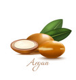 argan nuts and leaves in realistic style vector image