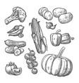 set vegetables cucumbers garlic corn pepper vector image