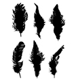 The collection of feathers vector image vector image