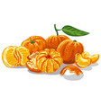 fresh juicy mandarines vector image