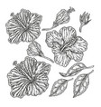 hand drawn tropical flowers vintage floral set vector image