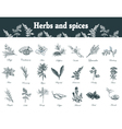 Herbs and spices set Hand drawn officinale vector image