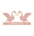 Wedding pink swans hold rings over white vector image