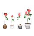 Set of Red Roses in Ceramic Flower Pots vector image vector image