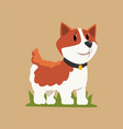 smiling welsh corgi standing on green grass dog vector image