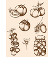 vintage hand drawn tomatoes vector image