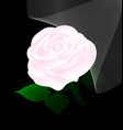 abstract white rose and veil vector image vector image