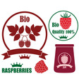 Raspberries vector image