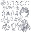 set with owls bats fireflies and moths vector image