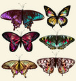 realistic butterflies for design vector image