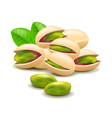 Pistachios nuts isolated on white vector image