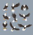 bald eagle image set on grey background vector image