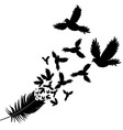 Feather of bird vector image