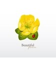 Yellow cherry flower with leaves and ladybug Logo vector image