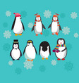 set with cute penguins character vector image