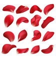 realistic red rose flower petals isolated on white vector image