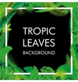 Tropical Leaves background isolate vector image