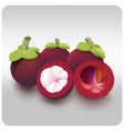 mangosteens for summer in thailand vector image vector image