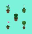 isometric plant set of peyote tree grower and vector image