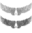 wings collection vector image