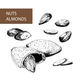 Nuts Almonds vector image
