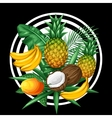 Background with tropical fruits and leaves Design vector image vector image