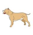 cartoon of pit bull dog vector image
