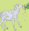sheep eating flowers vector image