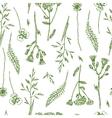 sketch of wildflower vector image