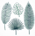 Isolated palm leaves handmade in sketch style vector image