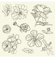 floral freehand vector image vector image