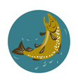 spotted trout fish jumping vector image