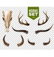 cow skull and horns set vector image