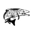 spotted speckled trout fish jumping vector image