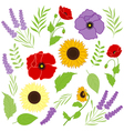 Provence Flowers vector image
