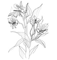 alstrameriya flower vector image vector image