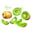 Watercolor Kiwi Fruit and his Sliced Segments vector image