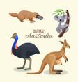 australia animals collection of brown kangaroo vector image