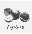 hazelnuts Organic Food vector image
