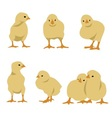 set of chickens vector image