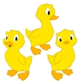 Cartoon Ducklings vector image