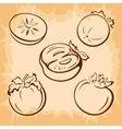 Fruits Persimmon Pictograms vector image