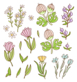 Isolated floral set vector image vector image