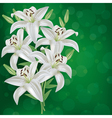Greeting or invitation card with bouquet lily vector image