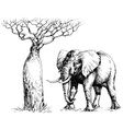 African elephant and baobab vector image
