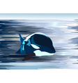 Killer Whale Drawing vector image