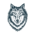 Wolf portrait vector image
