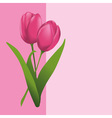 tulips pink card vector image