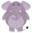 fat elephant on white background vector image